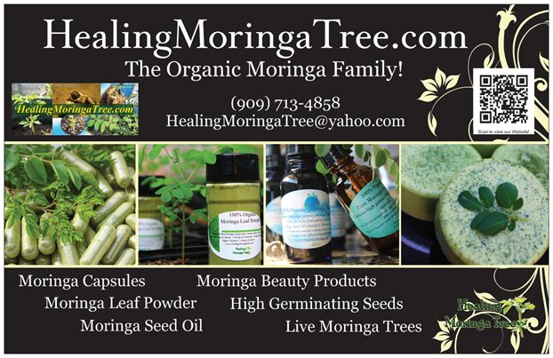 Contact Healing Moringa Tree Moringa Trees For Sale Near