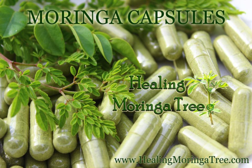 Organic Moringa Leaf Capsules Bulk Moringa
